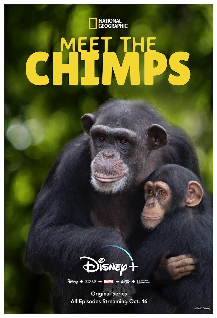 Key art for Disney+/Nat Geo's 'Meet the Chimps'